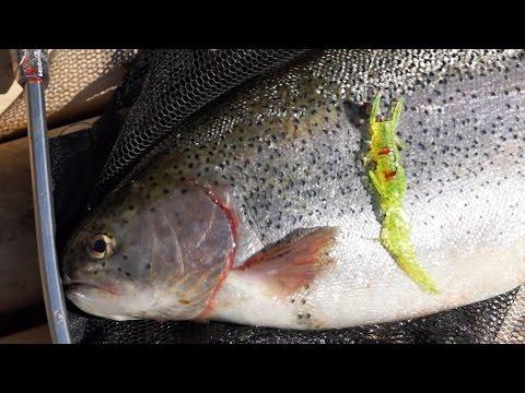 бородино рыбалка на форель