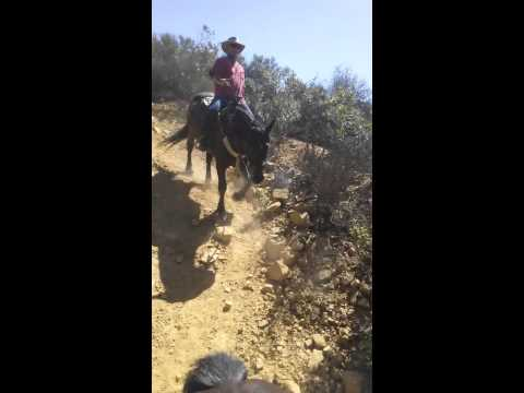 Horseback riding Santa barbara