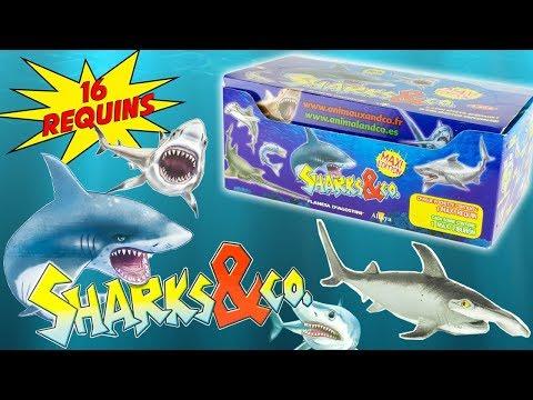 SHARKS & CO Requins Boite Complète 16 Pochettes Surprise Altaya Jouets Toy Review Juguetes Tiburon