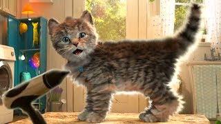 Little Kitten My Favorite Cat - Play Fun Cute Kitten Pet Care Cartoon Games For Children