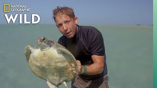 How Turtles Are Doing in Australia | Out There With Jack Randall by Nat Geo WILD