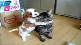 Try not to laugh, smile, or grin while watching the funniest video ever! This video is so hilarious with funny Dog and Cat other funny videos put together in...