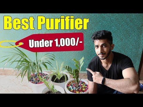 Best Air Purifier in India (2019) || Air Purifying Indoor Plants