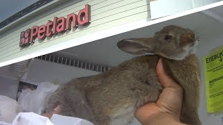 Rabbits are dying at Petland. by The Humane Society of the United States