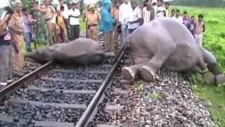 Video Elephants hit by speeding train in India MP3, 3GP, MP4, WEBM, AVI, FLV Mei 2017