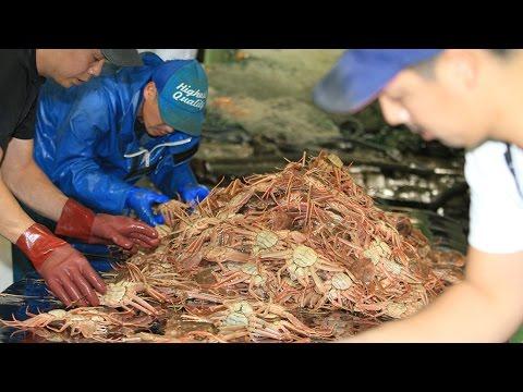 マツバガニ漁が解禁