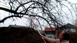 #299 Schneiden im Garten 2011 - Apfelhochstamm 2v6