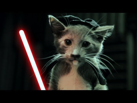 Kittensyoutube on Youtube What Goes Together Better Than Star Wars And Kittens I Mean