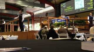 Timelapse of 2012 Magic Millions Gold Coast National Sale
