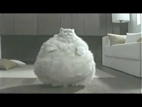 Cat thai ad (funny)