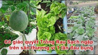 Cô giáo quyết Trồng Rau Sạch ngập trên sân thượng vì 1 lần đau bụngTrồng Rau Sạch, trồng rau, làm vườn, vườn rau, cách trồng rau, cách làm vườn, kinh nghiệm làm vườn, kinh nghiệm trồng rauTheo khampha.vn