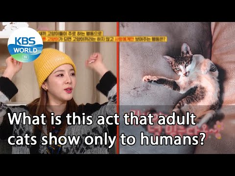 What is this act that adult cats show only to humans? (Problem Child in House) | KBS WORLD TV 210115