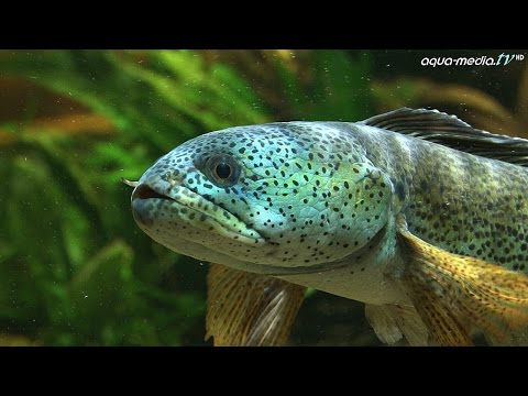 Zierfische: DAS BIOTOP-AQUARIUM (Workshop)