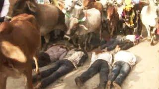 Dziwny i niebezpieczny rytuał w Indiach. Ludzie kładą się na ziemi, aby stado krów ich stratowało.