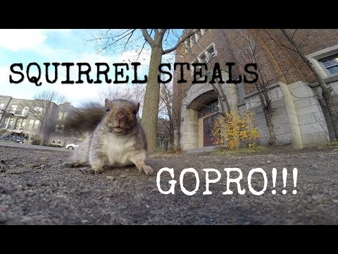 WATCH: 1 Minute Of A Squirrel Stealing A GoPro Camera Is The Best Thing You'll See Today