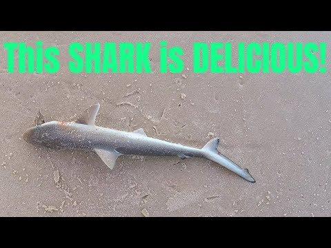 [360 VR] Philippines Cebu Hilutungan fish sanctuary - Thousands of fish in 360° - Thời lượng: 5 phút, 25 giây.