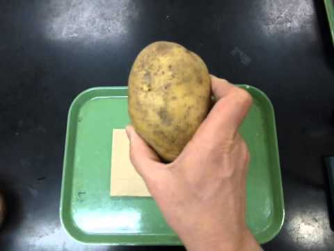 effect of temp on potato catalase enzyme reaction