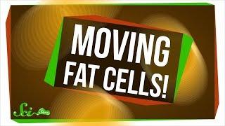 嫌われ者の脂肪細胞には意外な役割があった?