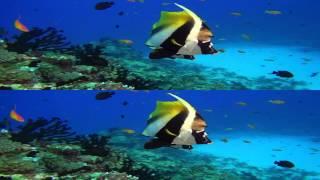 sample HDGirL amazing ocean 2012 1080p 3D