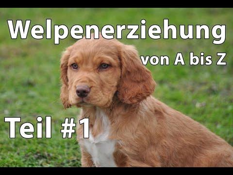 Hunde: Welpenerziehung Teil #1