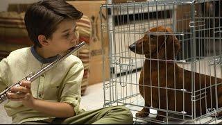 Nonton Sundance Film Festival 2016: Wiener-Dog Film Subtitle Indonesia Streaming Movie Download