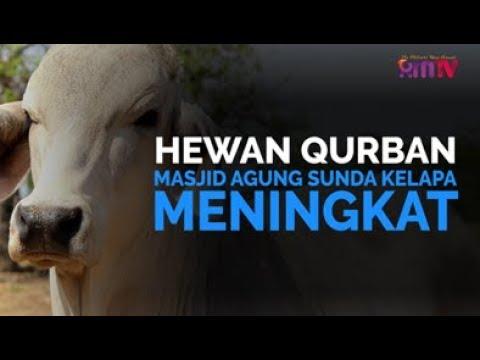 Hewan Qurban Masjid Agung Sunda Kelapa Meningkat