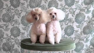 Pet Photography: Tips&Tricks Tip 22