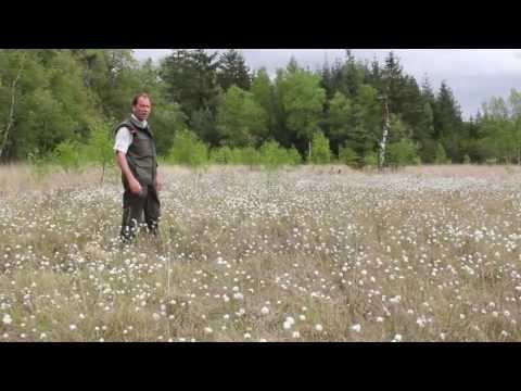 Bloeiers in het bos