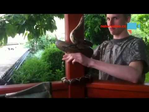 Domácí mazlíček - had škrtič a jeho obtáčení