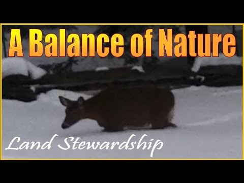 Sustainable Living and Philosophies of Land Stewardship. A Balance of Nature.