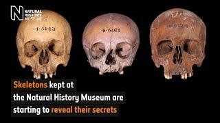 Skeletons reveal their secrets