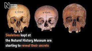Skeletons reveal their secrets