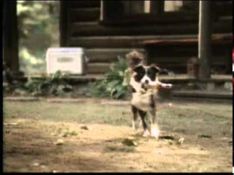 Banned Commercials Super Bowl Superbowl XXXVIII Bud Light Good dog