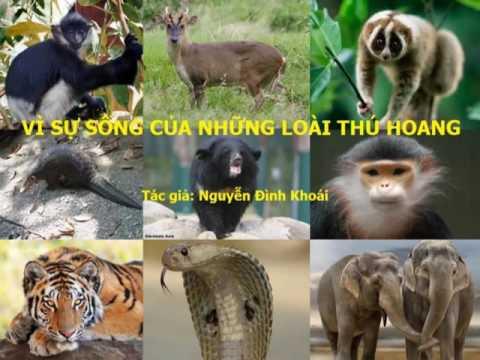 Vì sự sống của những loài thú hoang