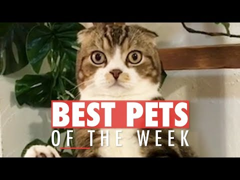 The Best Pet Videos of the Week 247998250288940523