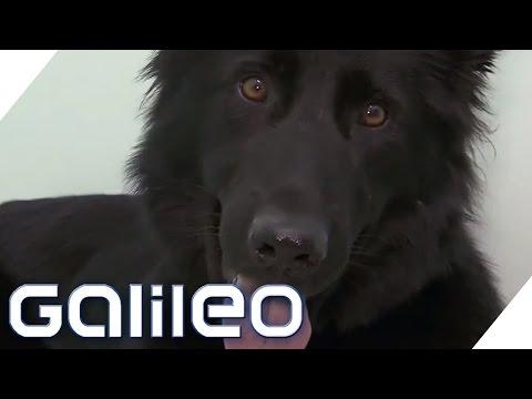 Handyschnüffel-Hunde | Galileo | ProSieben