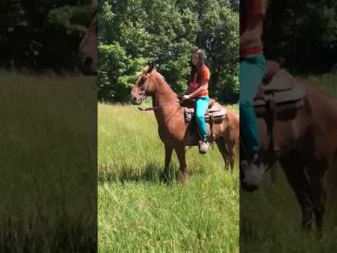 Jaco's walking horse Paducah Ky