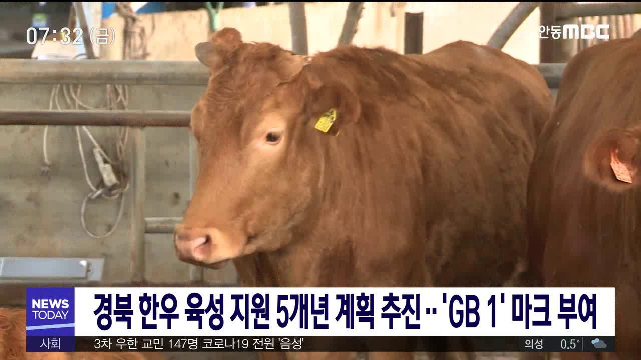 경북 한우 육성 지원 5개년 계획 추진