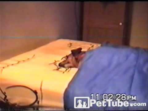 Cachorro en la cama
