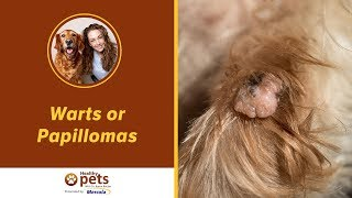 Warts or Papillomas - Symptoms and Treatments