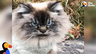 Grumpy Cat Explains Why Winter is THE WORST | The Dodo by The Dodo