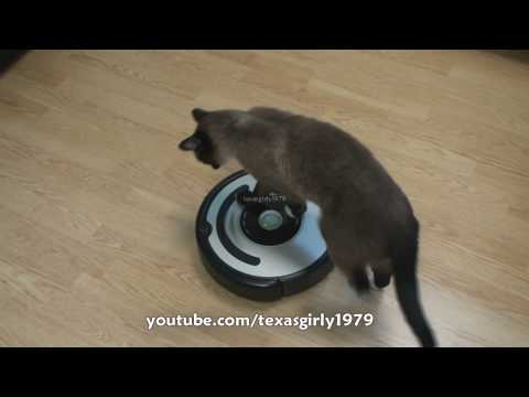 Cat shows HOW TO use iRobot Roomba Vacuum.