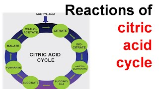 Reactions of citric acid cycle