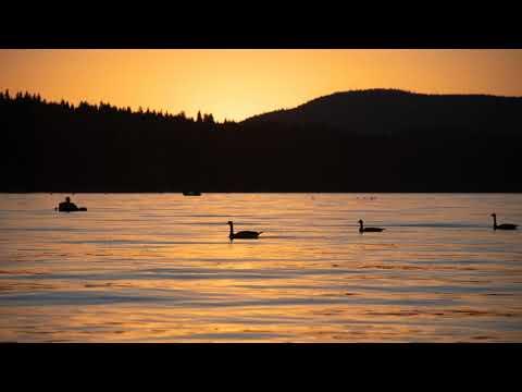 Stillwater Fly Fishing Tactics For Spring - Hal Janssen