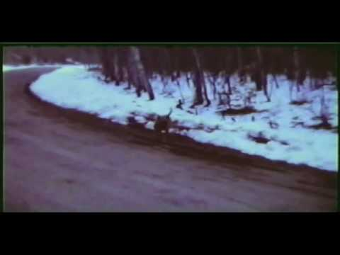 Gables Film Part 2 of 4 caught on video bigfoot video