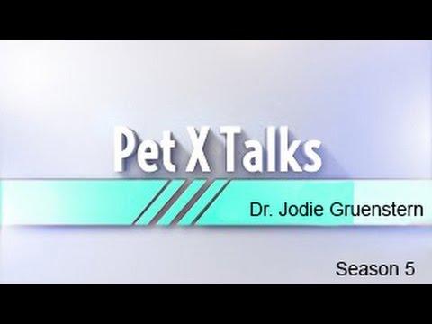 $17 Pet vs. $100,000 Pet - Thời lượng: 14 phút.