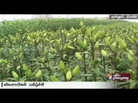 Cost-of-cut-flowers-called-Koy-Malargal-increases-in-view-of-the-upcoming-festivals