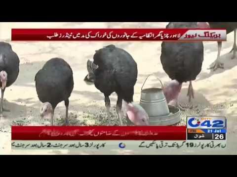 لاہور چڑیا گھر انتظامیہ کا جانوروں کی خوراک کی مد میں ٹینڈر طلب