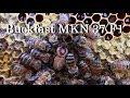 Дочь Buckfast MKN 37 F1