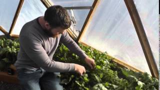 Episode 5: Enjoying Winter Vegetable Harvest in the 15' Growing Dome®